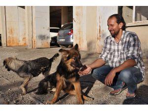 Beli kırılan köpeğe yürüteçli destek