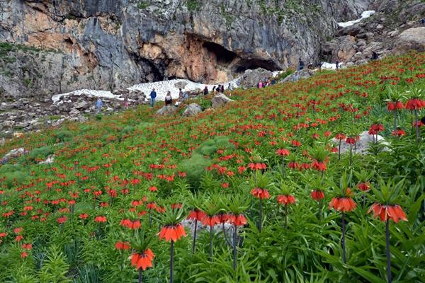 """Dersim'in dağları """"Ağlayan Gelinler""""le süslendi galerisi resim 1"""