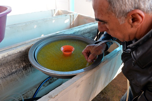 Tunceli kafes balıkçılığında iddialı galerisi resim 5