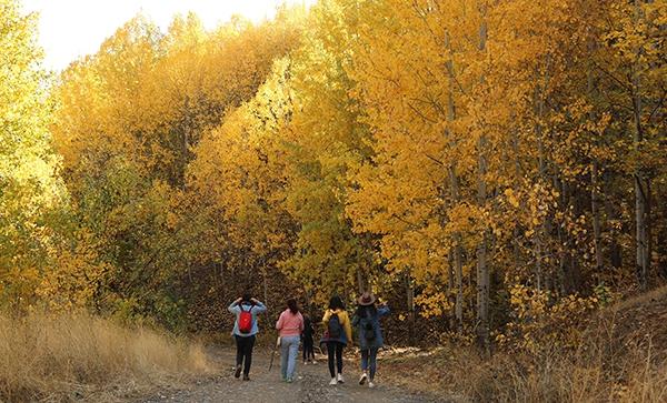 """Dersim'de sonbaharla gelen """"Renk Cümbüşü"""" galerisi resim 1"""