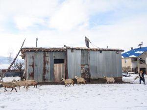 Ovacık'ta kış, zorlukları ve güzellikleriyle yaşanıyor