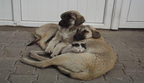 Kedi ve köpeğin şaşırtan dostluğu galerisi resim 1