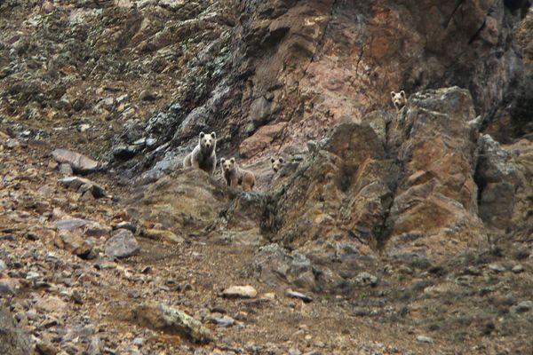 Aç kalan ayılar ilçeye indi galerisi resim 1
