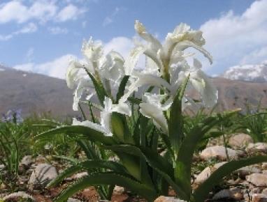 Çiçek cenneti yok olacak