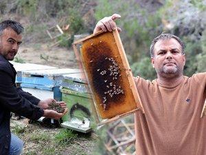 Bal Arısı Ölümleri Endişe Yarattı