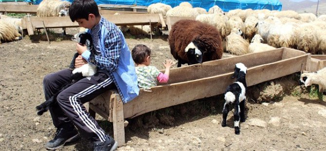Hem Çobanlık Yapıp Hem Sınavlarda Başarılı Oldular
