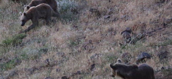Kışın domuzları yazın ayıları besliyorlar