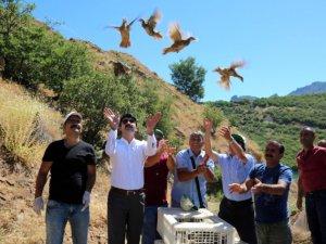 Bin Kınalı Keklik Doğaya Bırakıldı