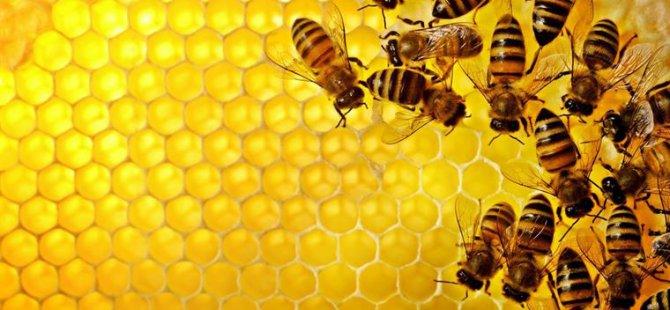 Arıcılara malzeme desteği verilecek