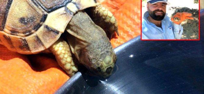 Kaplumbağaya Kendi Bardağından Su İçirdi