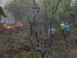 'Dersim orman yangınları raporlaştırılıyor'