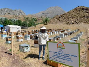 Organik arıcılık devlet desteğiyle artıyor