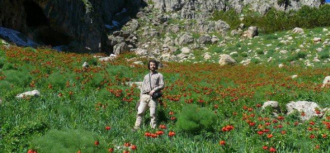 Tunceli'de yeni bir bitki türü keşfedildi