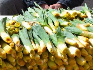 'Gulik'i tohum vermeden toplamayın' uyarısı