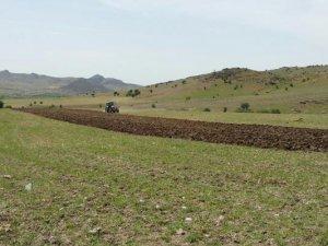 Organik nohut yetiştiriciliği projesi hayata geçiyor