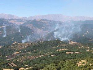 Aliboğazı'nda orman yangını