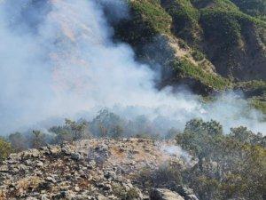 Dersim'de bilanço ağır: Bin 500 hektar ormanlık alan yok oldu