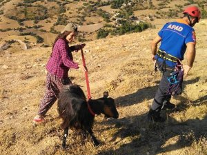 AFAD ekipleri mahsur kalan keçiyi kurtardı