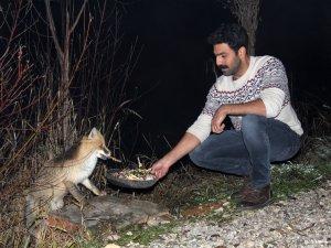 Aç kalan tilkiyi tesis sahibi besliyor