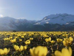 Ovacık'ta ilkbahar güzelliği