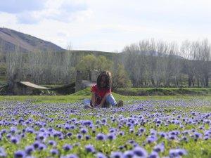 Küre çiçeklerinin göz alıcı güzelliği