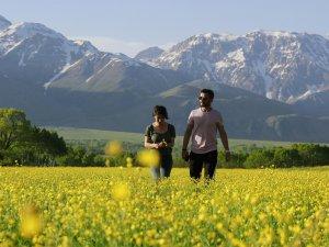 Düğün çiçekleri doğayı sarıya boyadı