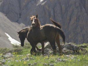 Bahar geldi, atlar doğaya çıktı