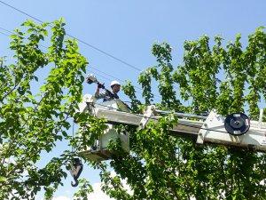 FEDAŞ'tan ağaç kesme ve budama uyarısı