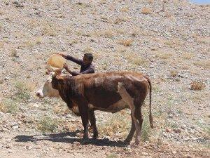 Zehirlenen inekler için seferber oldular