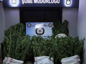 Uyuşturucu operasyonu: 2 tutuklama