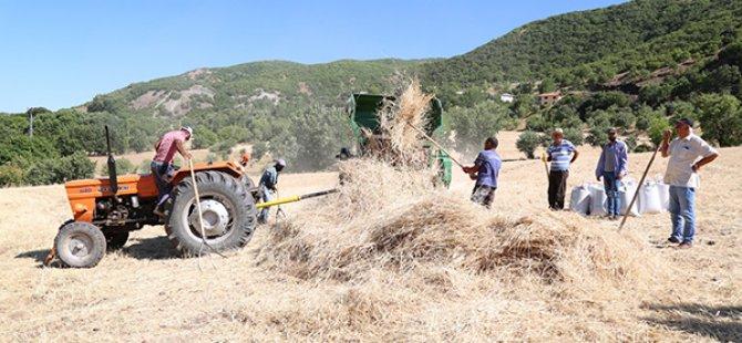 Organik tohumlar yok olmasın diye üretimi yapılıyor VİDEO