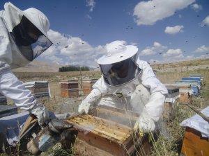 Göçer arıcıların zorlu bal hasadı