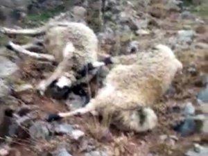 Yıldırım düştü: 20 koyun telef oldu
