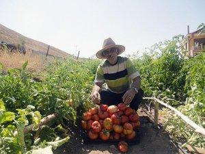 Huzur bulduğu köyünde organik sebze ve meyve yetiştiriyor