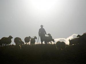 Göçerlerin yayladan köye zorlu yolculuğu