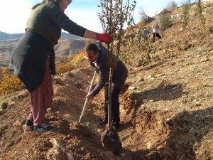 Hozat Belediyesi, fidanları toprakla buluşturdu