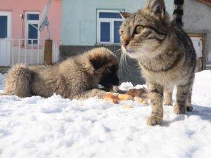 Ovacık'ta aç kalan sokak hayvanlarına şefkat eli
