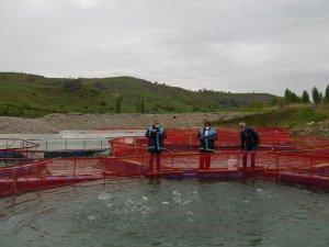 Kaya: Alabalık üretiminde kapasitemiz 10 bin tonun üzerine çıkacak