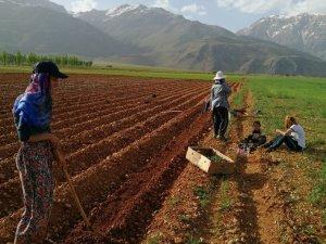 5 girişimci kadın için çilek bahçesi oluşturuldu