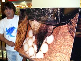 Deniz kaplumbağaları sergisine büyük ilgi