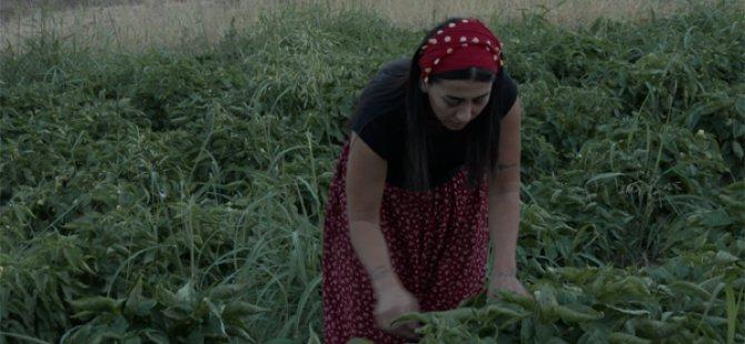 Yoksul vatandaşlar için ektiği bostanın ürünlerini elleriyle dağıtıyor VİDEO