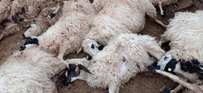 Pertek'te üreticiye ait 27 koyun telef oldu
