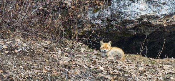Munzur Vadisi Milli Parkı'nda doğal yaşam
