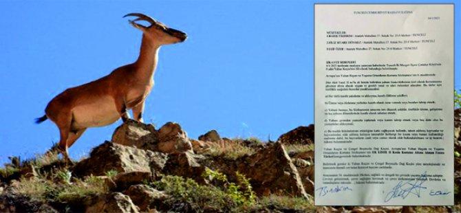 Avukatlar, yaban keçileri için suç duyurusunda bulundu