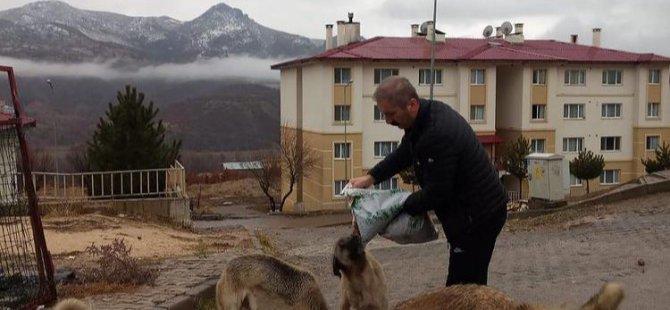Yaz kış demeden sokak hayvanlarının yardımına koşuyorlar