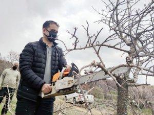 Çemişgezek'te menengiç ağacında Antep fıstığı yetişecek