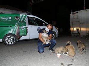 Suya atılan yavru köpekler kurtarıldı