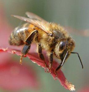 İngiltere'de arıların saldırdığı dört at öldü