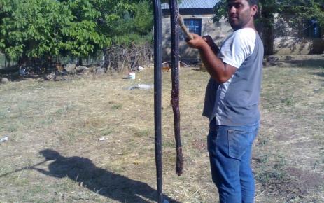 Tunceli'de 3 metre boyunda yılan öldürüldü