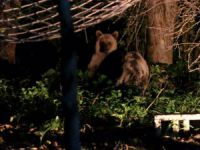 Bahçesine gelen ayıya kutuyla bal ikram etti